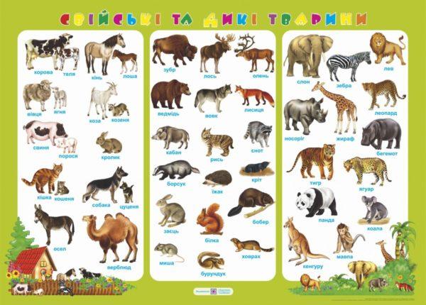 Плакат «Свійські та дикі тварини»